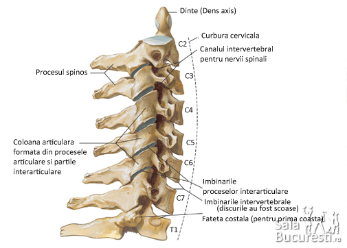 tratament spinal și articular articulația șoldului doare și face clic